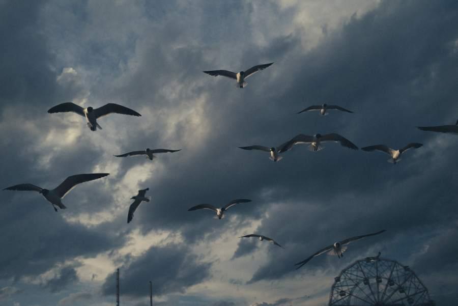 martin-colombet.jpg