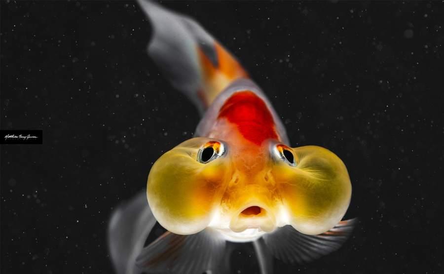 © Star Fish de Matthieu Sorey Garnier
